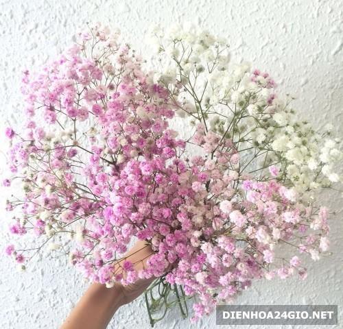 Giá 1 bó hoa baby là bao nhiêu? Địa chỉ có giá 1 bó hoa bi ...